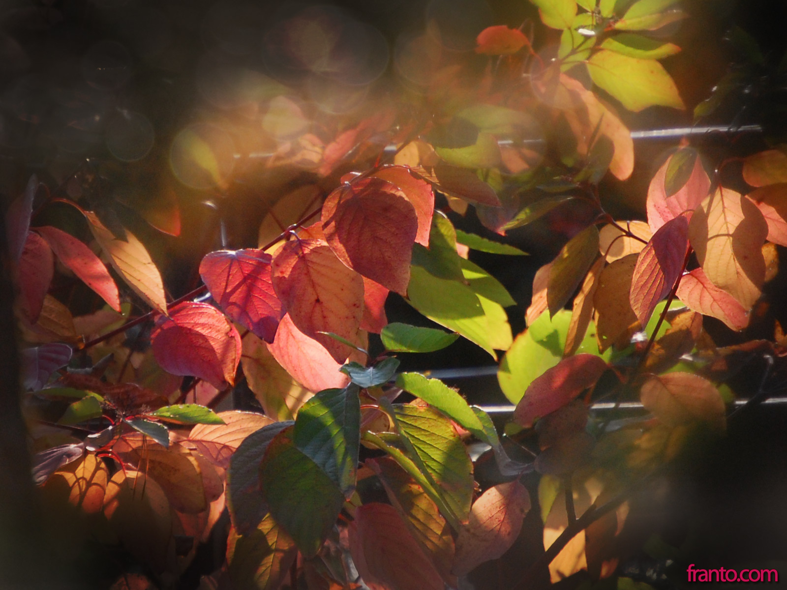 We called the wallpaper Rose Autumn. So if you like Rose Autumn,